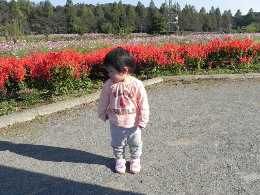 花の丘公園の花々_c0187781_23174525.jpg