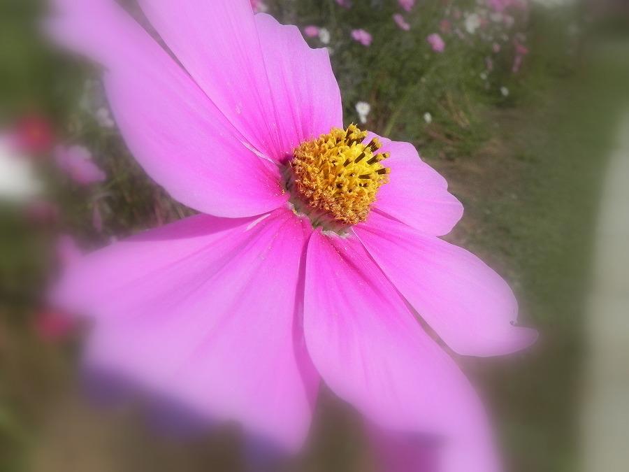 花の丘公園の花々_c0187781_23222989.jpg