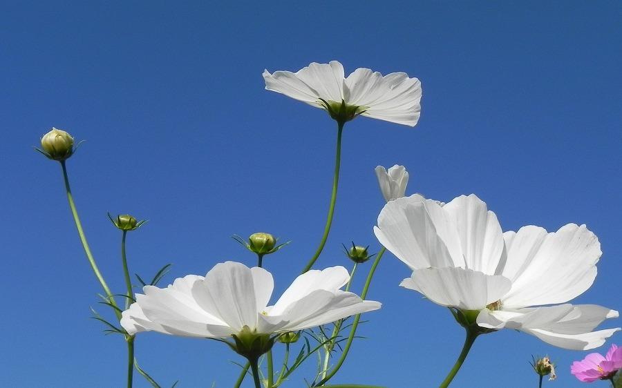 花の丘公園の花々_c0187781_2322536.jpg