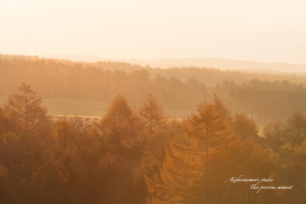 八ケ岳牧場公園からの朝焼け_c0137403_16365647.jpg