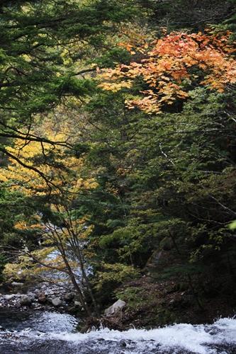 秋景色_f0007106_22265199.jpg