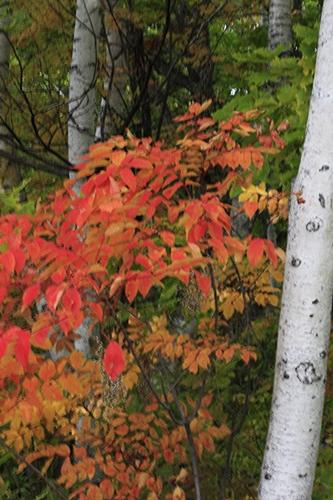 秋景色_f0007106_22281554.jpg