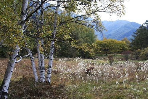 秋景色_f0007106_2230498.jpg
