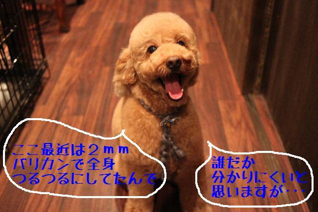 b0130018_9101623.jpg