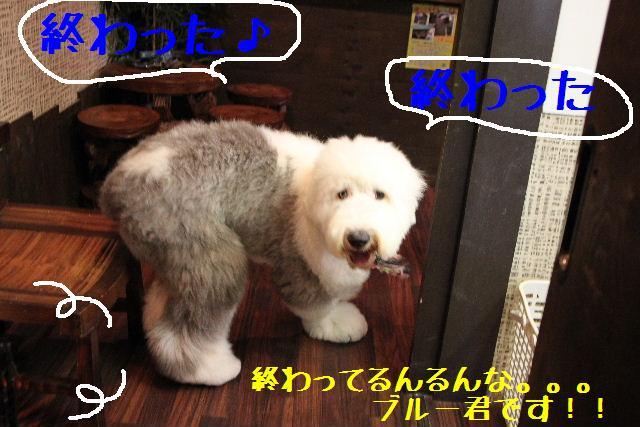 b0130018_94621.jpg