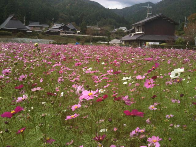 京都 嵐山/大原_b0054727_210725.jpg