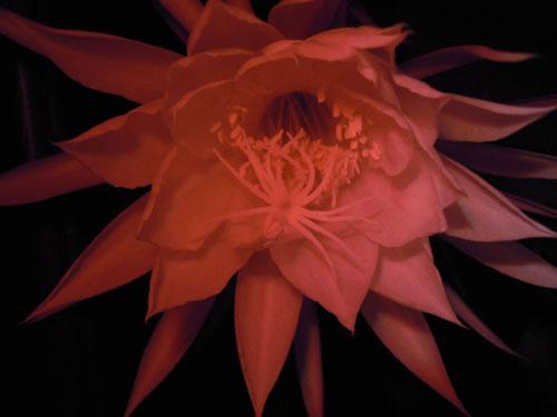 夜に咲く花、青空に咲く花、秋の花_e0097534_18131678.jpg