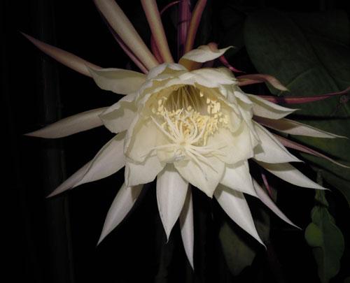 夜に咲く花、青空に咲く花、秋の花_e0097534_18182590.jpg
