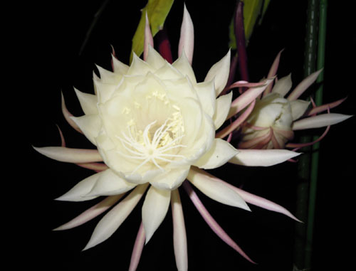 夜に咲く花、青空に咲く花、秋の花_e0097534_18183958.jpg