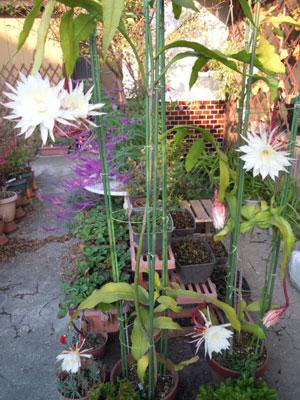 夜に咲く花、青空に咲く花、秋の花_e0097534_18191255.jpg