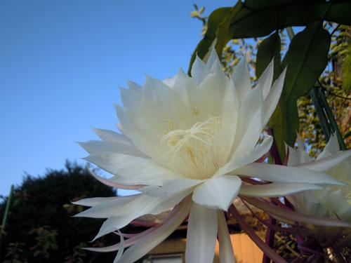 夜に咲く花、青空に咲く花、秋の花_e0097534_1824346.jpg