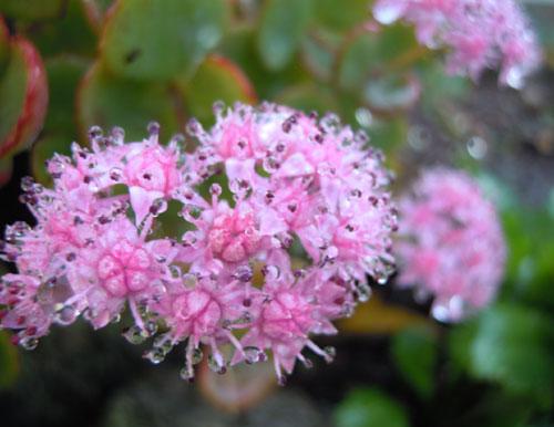 夜に咲く花、青空に咲く花、秋の花_e0097534_18272115.jpg