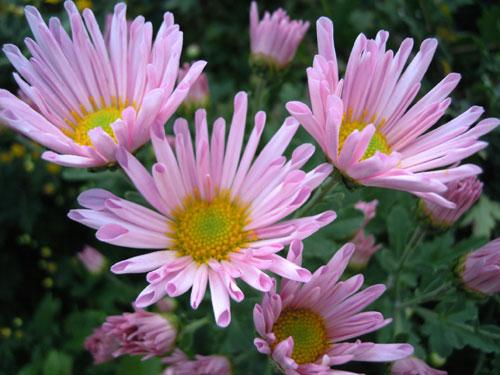 夜に咲く花、青空に咲く花、秋の花_e0097534_18281467.jpg