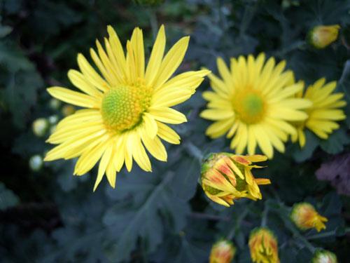 夜に咲く花、青空に咲く花、秋の花_e0097534_18282579.jpg