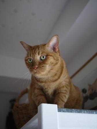 むずむず猫 しぇる編。_a0143140_23403389.jpg