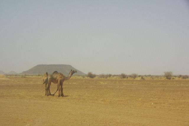 【スーダン周遊】 昼食、そして、ナイル川第6カタラクトへ_c0011649_06134.jpg