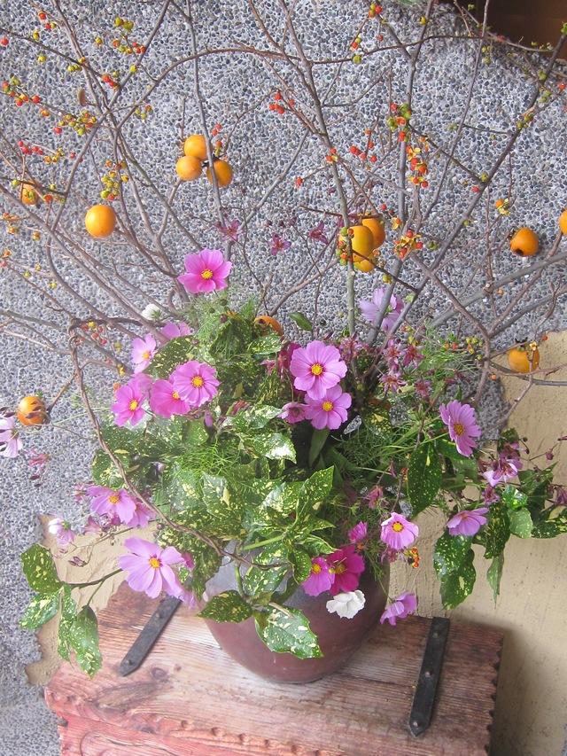 庭の薔薇が咲いた_d0177560_21515183.jpg