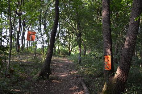 『横浜の森美術展2011』での作品_c0131063_1754790.jpg