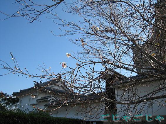 姫路城_b0189573_16104263.jpg