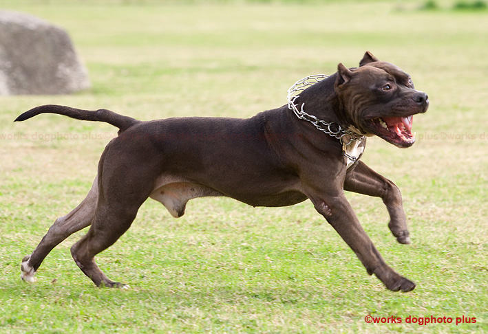 最強の犬_d0164190_12491998.jpg
