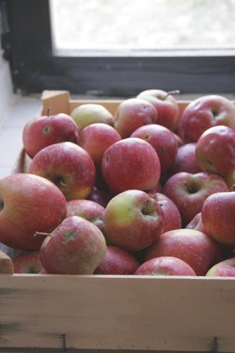 リンゴの香り~GASな人たち_f0106597_1884176.jpg