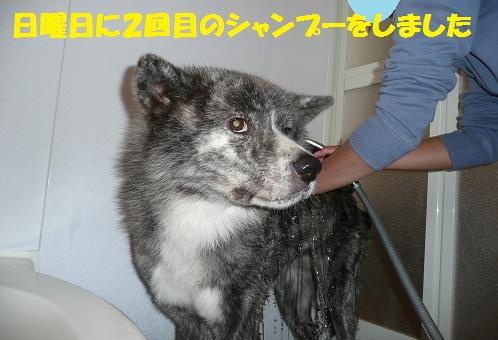 f0121712_6594251.jpg