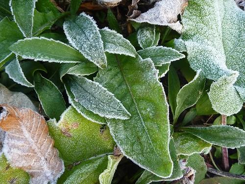 霜と色とりどり_c0048117_173992.jpg