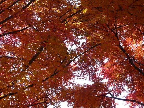 美しい日本_d0127634_8283225.jpg