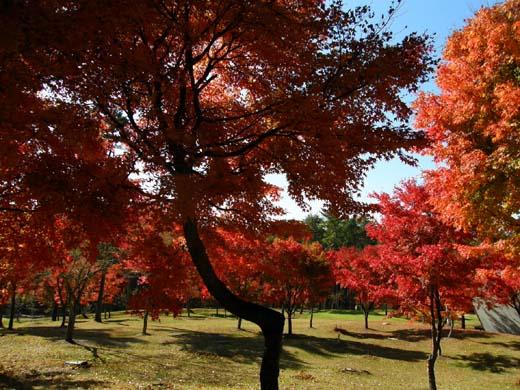 美しい日本_d0127634_84111.jpg