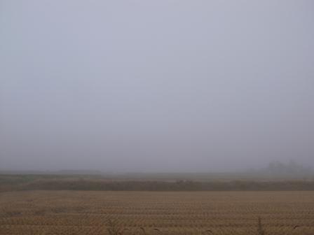 白い霧に覆われて_a0014840_183979.jpg