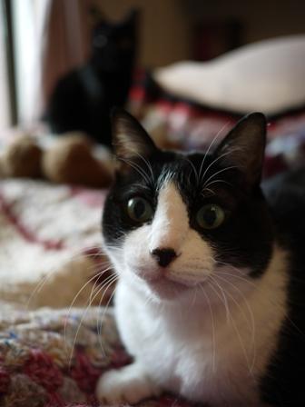 あったかくまちゃん猫 空ろった編。_a0143140_23583042.jpg