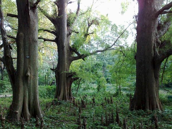 静かな森、見つけた_a0086851_2381676.jpg
