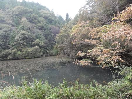 H23年度11月運営委員会 in  孝子の森_c0108460_18214220.jpg