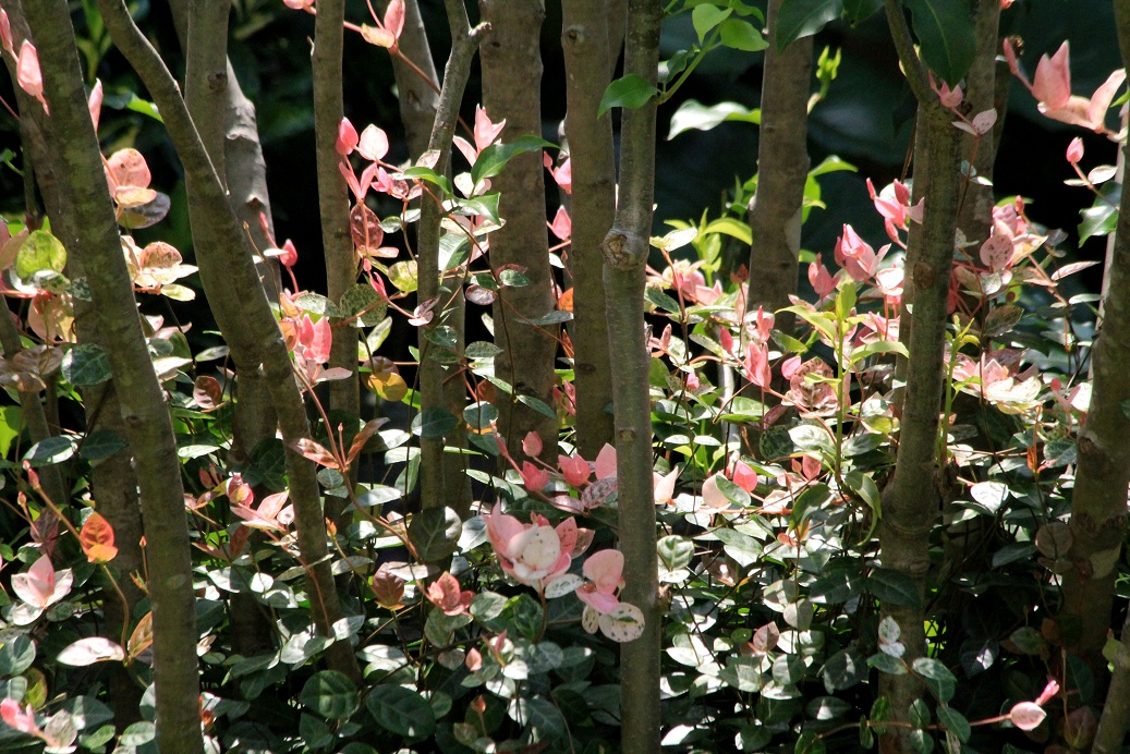 庭の大改修その2_a0107574_7345161.jpg