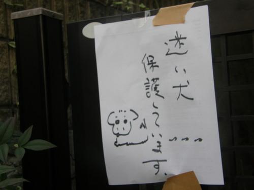 迷子犬_e0232277_10332997.jpg