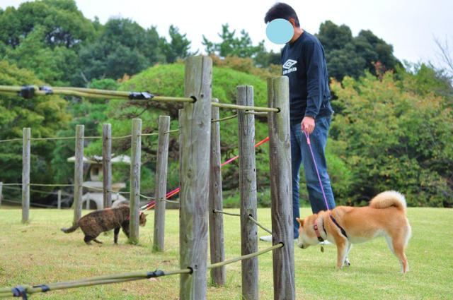 日本庭園_a0126590_7503296.jpg