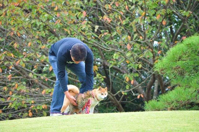 日本庭園_a0126590_7522096.jpg