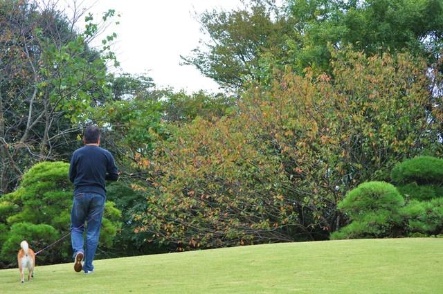 日本庭園_a0126590_7575159.jpg