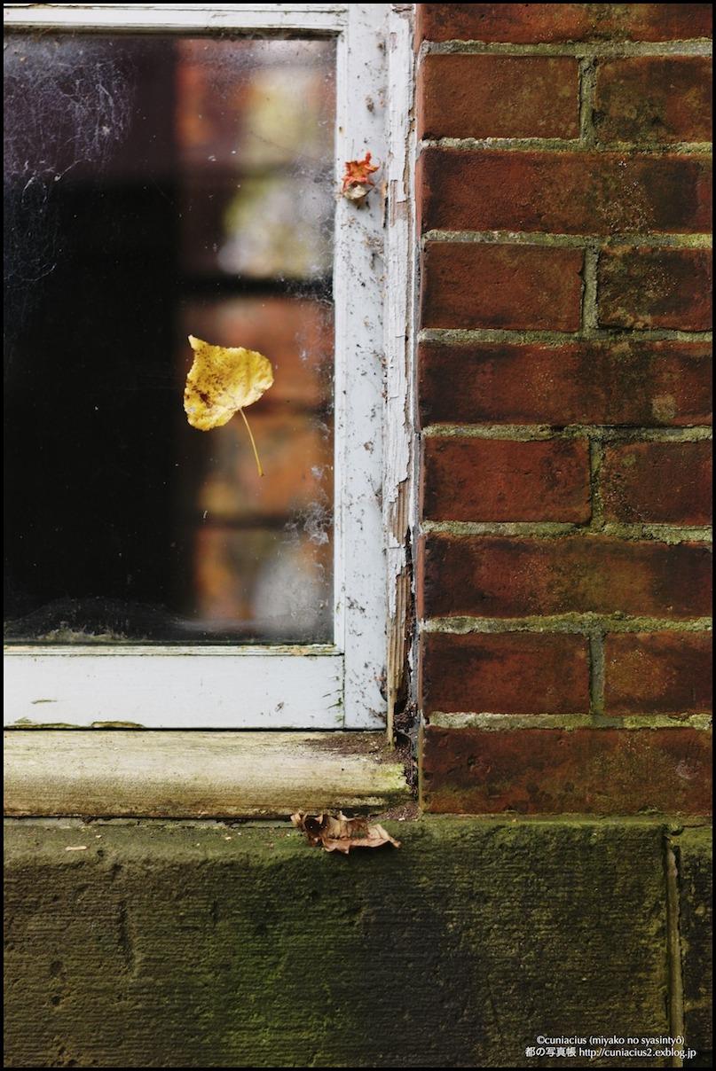 秋の窓_f0042194_1648496.jpg