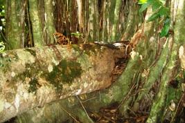 神さんが住む木がたいへんなことに!_a0043520_22452024.jpg