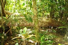 神さんが住む木がたいへんなことに!_a0043520_22453640.jpg