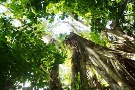 神さんが住む木がたいへんなことに!_a0043520_22455527.jpg