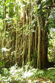 神さんが住む木がたいへんなことに!_a0043520_22464112.jpg