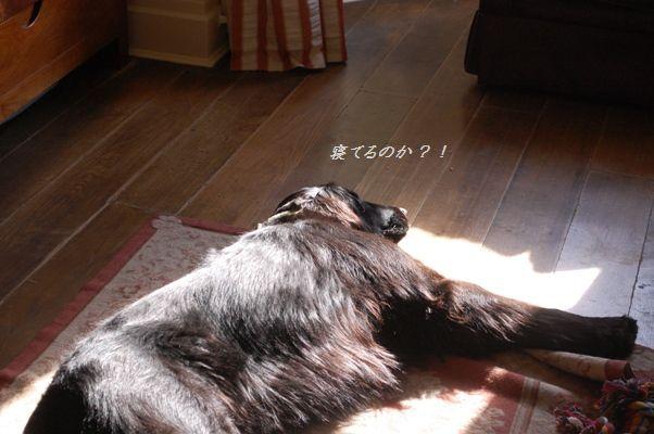 えのきのカリカリ焼き飯_d0104926_026249.jpg