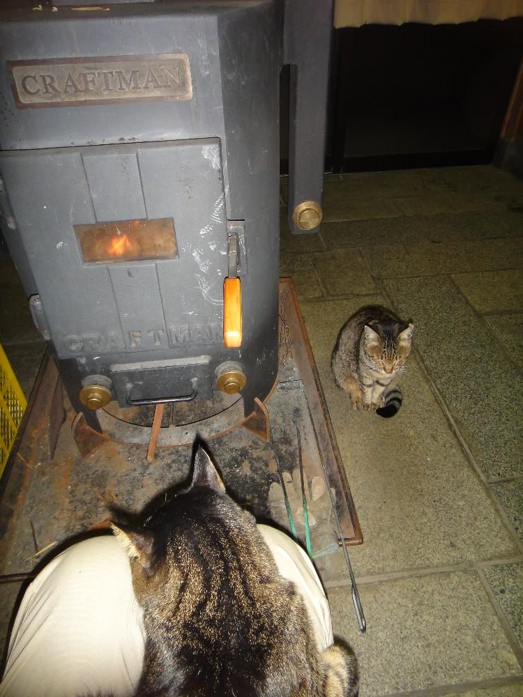 ネコになりたい_c0111229_18122083.jpg