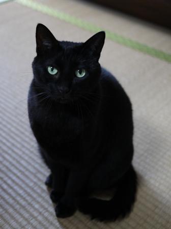 猫のお友だち りんちゃんペコちゃん編。_a0143140_23212622.jpg