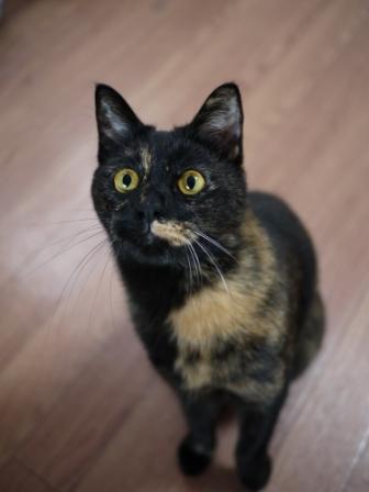 猫のお友だち りんちゃんペコちゃん編。_a0143140_2321494.jpg