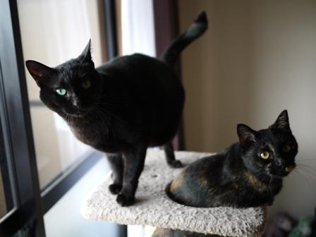 猫のお友だち りんちゃんペコちゃん編。_a0143140_23233115.jpg