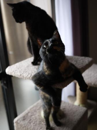猫のお友だち りんちゃんペコちゃん編。_a0143140_2324993.jpg