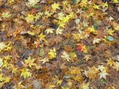秋のポレポレウォーク_f0019247_23122348.jpg